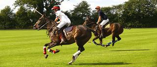 horse polo