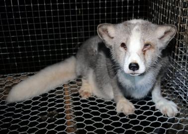 Vintage Fur: Animals Still Died for Your Coat