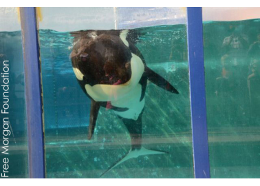 PETA US Sues SeaWorld for Violating Orcas' Constitutional Rights