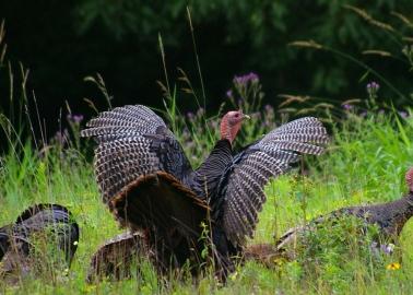 God Didn't Create Turkeys so They'd End Up on Our Plates on Christmas