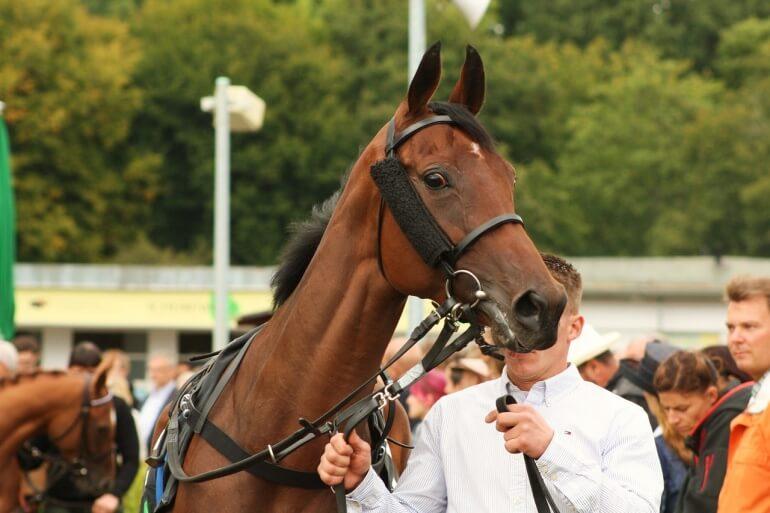Racehorse CC0