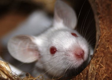 STOP the Torturous Use of Animals in Experiments