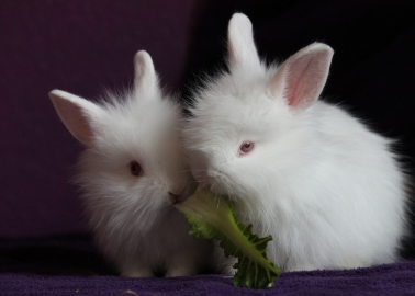 GOOD NEWS: After Receiving Hundreds of Phone Calls, The Kooples Ditches Angora
