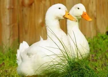 Victory: Selfridges Drops Foie Gras