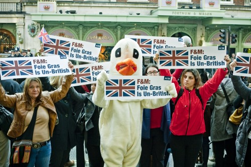 PETA's goose and activists welcoming the Queen