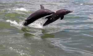 Simon Cowell Axes 'Xtra Factor' Dolphin Scenes
