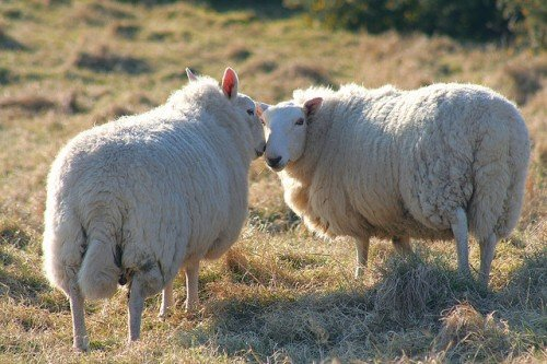 Paul O'Grady to Lord Mayor: Please Don't Herd Sheep Across London Bridge