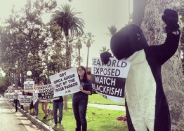 'Blackfish' Still Making Waves: BAFTAs, Celebrities, Demos and More