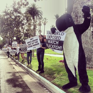 Anti-SeaWorld Demo/Blackfish