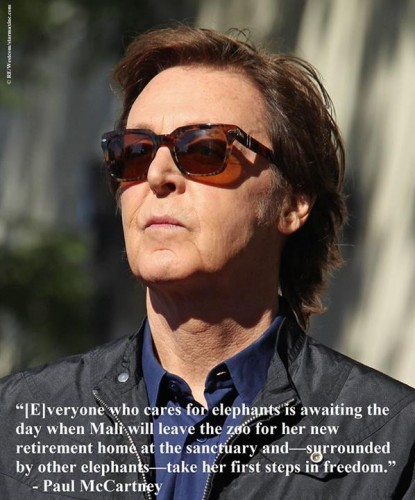 Paul McCartney Speaks Out For Mali The Elephant