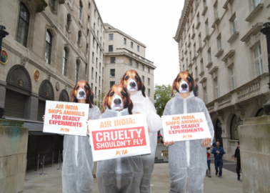 Air India: Cruelty Shouldn't Fly