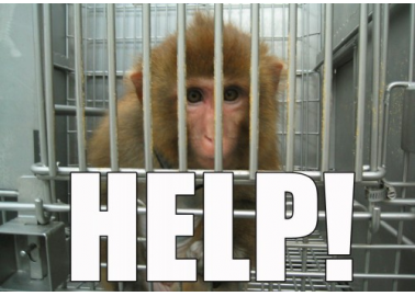 Phone Air France to Protest Against Shipping Monkeys to Labs