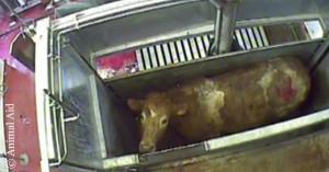 Animal Aid Slaughter FB