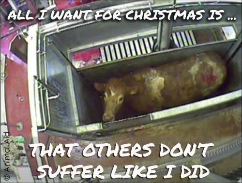 Animal Aid Slaughter copy