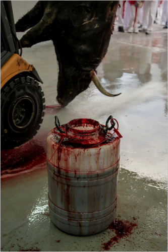 Bull bleeds to death after bullfight