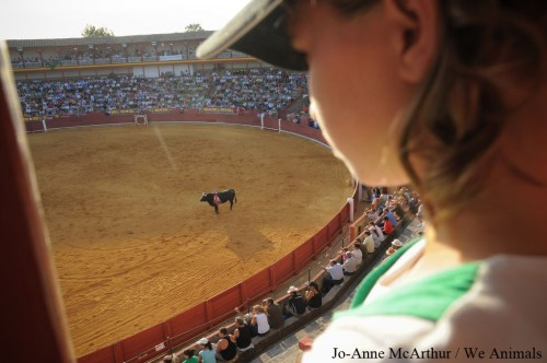 Bullfighting Violates Rights of the Child: United Nations