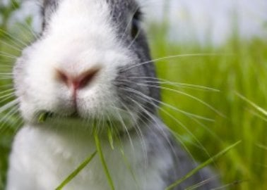 PETA US Welcomes Hair Removal Brand sunny to Cruelty-Free List
