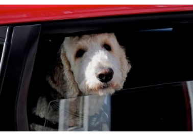 A Hot-Weather Warning for Dogs