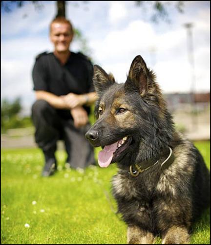 CC Police Dog Crop