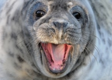 Norway's Seals Can Breathe a Sigh of Relief