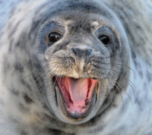victory for Canada seals