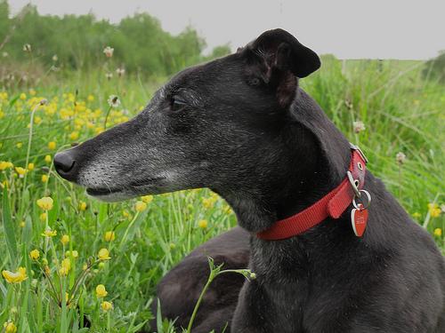 Greyhound racing involves exploiting animals for profit and gambling