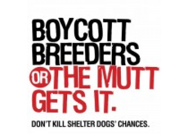 'Boycott Breeders or the Mutt Gets It'