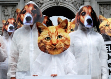 Almost 100 'Dogs' and 'Cats' Line Up to Plead for Protection in Laboratories