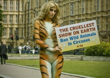 No End in Sight for Wild Animals in British Circuses