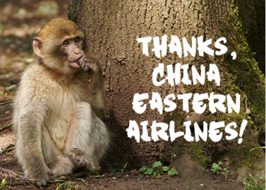First Class! China Eastern Airlines Stops Shipping Primates to Labs