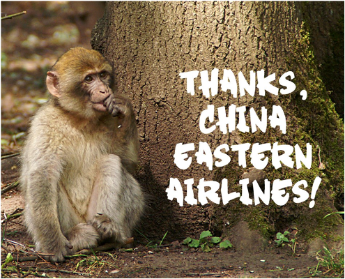 Primates will no longer be shipped from China!