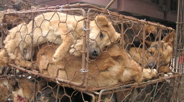 Dogs in crates in China