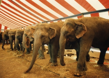 Animals in Circuses: Ringside Seats for a Spectacle of Cruelty