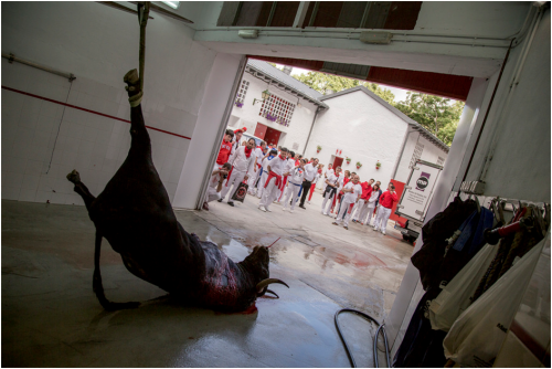 Crowd watch bull being strung up by his leg