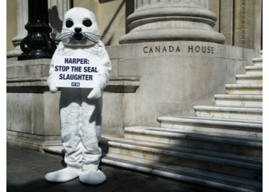 Giant 'Seal' Wants to Speak With Canadian PM Stephen Harper