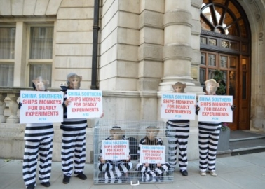 Caged 'Monkeys' Protest Against Primate Trafficking