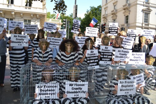 Air France is the only major airline that trafficks primates for vivisection
