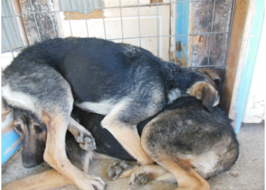 Eight Dogs Spayed = Half a Million Others Saved