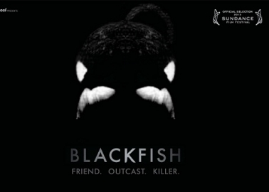 Not to Be Missed: WATCH #BlackfishOnBBC4