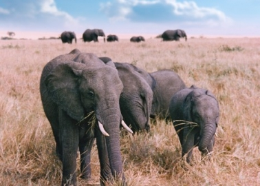 11 Facts That Will Make You Love Elephants Even More