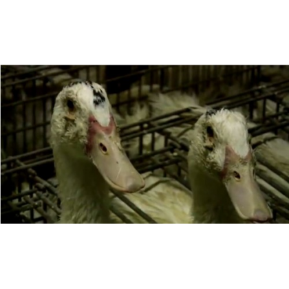 Here's What to Do if You See Foie Gras on the Menu