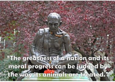 British MPs Celebrate Gandhi's Birthday by Going Vegan