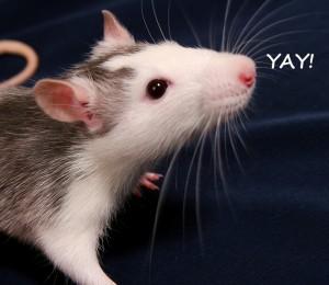 HAPPY RATTY