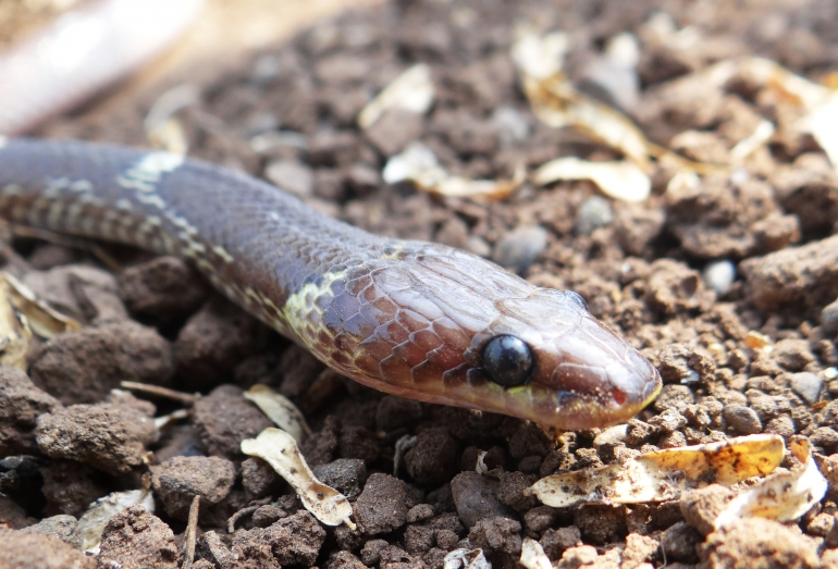 Image 1 (snake portrait from Animal Rahat)