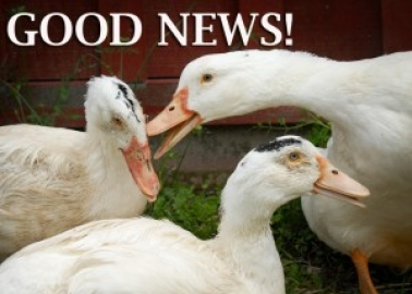 GOOD NEWS: India Bans the Sale of Foie Gras!