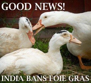 India Geese