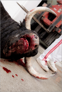 Injured-bull-201x300.png