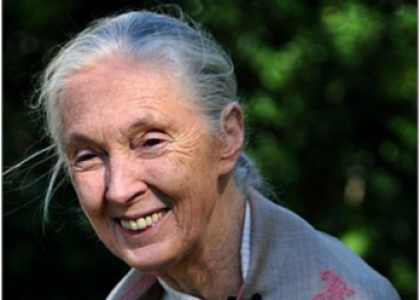 Dr Jane Goodall Calls On Air France to Stop Cruel Monkey Business