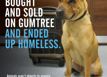 Abandoned Dog Kai Is Why You Should Never Buy or Sell an Animal Online