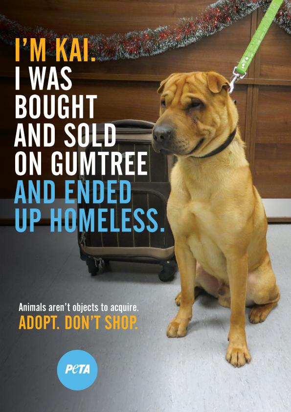 PETA ad: Kai the dog, abandoned at Ayr station